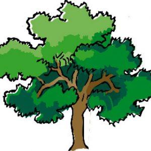 003 003 003 tree